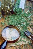 Zioła lecznicze — Zdjęcie stockowe