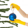 Stock Photo: Dressing christmas tree