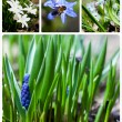 Collage of flowers — Foto de Stock