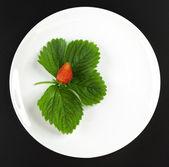 草莓的白板上的叶子 — 图库照片