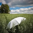 An umbrella — Stock Photo