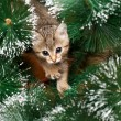 Beautiful kitten with fir tree — Stock Photo #32693423