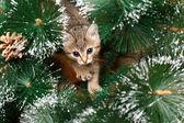 Lindo gatinho com árvore de abeto — Foto Stock
