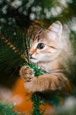 Cat climbing on a tree — Stock Photo