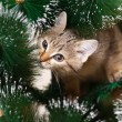 Cat climbing on tree — Stock Photo #34420977