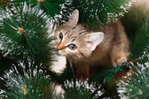 Cat climbing on a tree — Stock Photo
