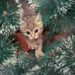 Beautiful kitten with fir tree — Stock Photo