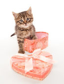 Funny kitten with gift box — Stock Photo