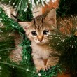 Sad kitten on a new year tree — Stock Photo