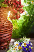Still life. ripe wild strawberries and wildflowers — Stock Photo