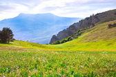 Magnifique paysage de montagne — Photo
