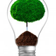 Concept. ecological lamp with green tree — Stock Photo #14626229