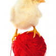 Stock Photo: Ball of yarn and chicken isolated on white
