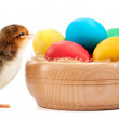 Rad chick with easter eggs. isolated on white — Stock Photo