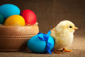 Cute small chick with easter eggs — Stock Photo