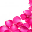 Royalty-Free Stock Photo: Pink rose petals isolated on the white
