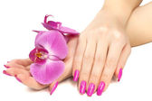 Female hands with pink orchid flower — Stock Photo