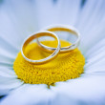 Beautiful wedding rings — Stock Photo