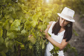 Pretty girl in the rays of the evening sun on the vineyard — Stock fotografie