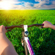 Cyclist in green field on a bike. travel — Stock Photo