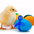 Small yellow chick with easter eggs. isolated — Stock Photo