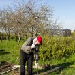 Stock Photo: Old mworking in vegetable garden