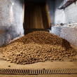 Stock Photo: Potatoes in storage house