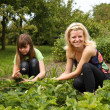 Daughter and mother is working in the vegetables garden — Stock Photo