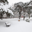 Snow in park — Stock Photo