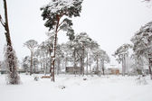 Snow in park — Stock Photo