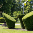 Green Topiary — Stock Photo