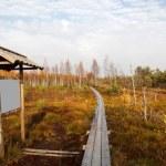 Autumn bog — Stock Photo
