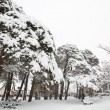 Stock Photo: City park winter