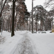 City Park in winter — Stock Photo