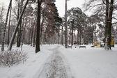 City Park in winter — Stock Photo