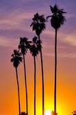 Row of palm trees — Stock Photo