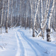 Winter landscape of snow-covered trees - Stock Photo