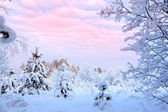 Winter landscape of snow-covered trees — Stok fotoğraf