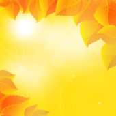 Autumn leaves on a sunny sky background — Vetorial Stock