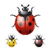 Ladybug isolated on white background — Stock Vector