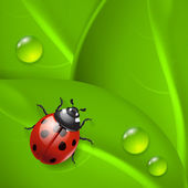 Green background with ladybird and dew — ストックベクタ