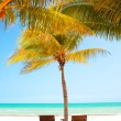 Two chairs under palm trees on perfect tropical beach. Holbox, Mexico — Stock Photo