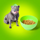 Blue staffie with his bowl of food — Photo