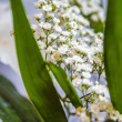 Stock Photo: White gypsophila