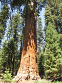 Sequoia National Park — Stockfoto