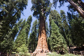 Sequoia National Park — 图库照片