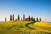 The Tuscan Land — Stock Photo