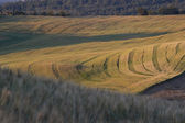 Tuscan Landscape — Foto Stock
