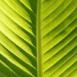 Closeup of a green leaf structure — Stock Photo