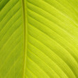Stock Photo: Closeup of a green leaf structure